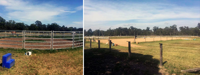 horse boarding stables maitland