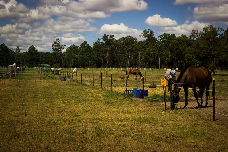 hunter valley paddock agistment
