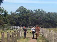Odyssean Horse Agistment & Stables