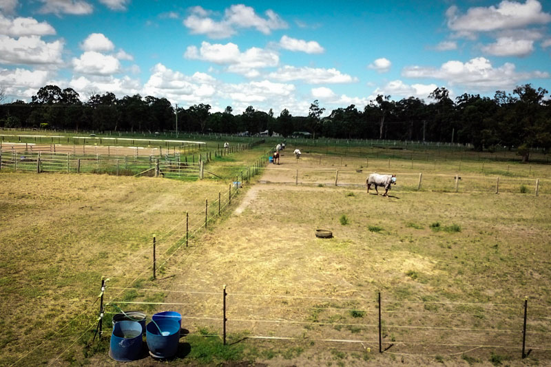 shared paddock agistment hunter valley